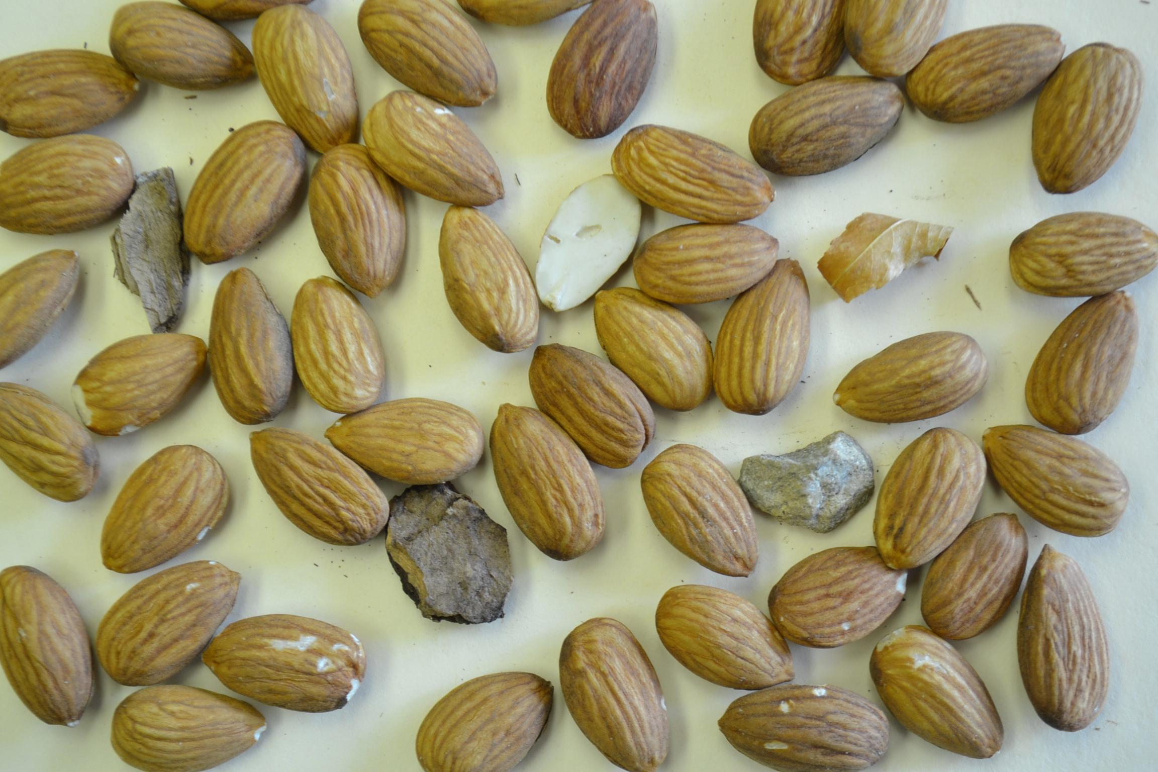 Almonds_1